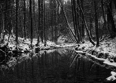 nature, winter, trees, forests, monochrome, rivers, greyscale - related desktop wallpaper