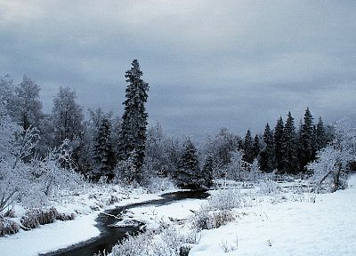 winter, snow, trees, forests, frost, rivers, creek - related desktop wallpaper