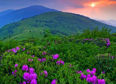 landscapes, flowers, fields, HDR photography - related desktop wallpaper