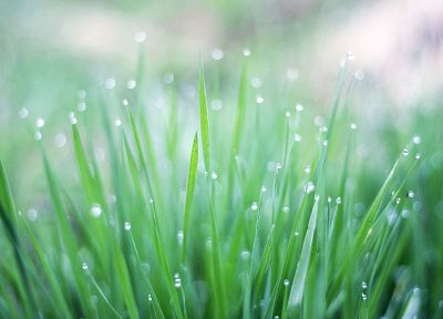 nature, grass, plants, depth of field, dew - related desktop wallpaper