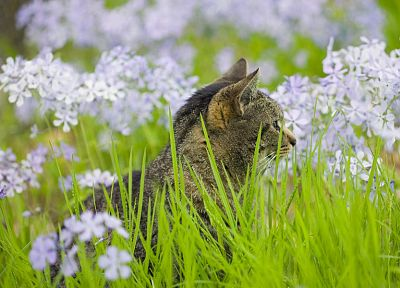 green, flowers, cats, grass, kittens - desktop wallpaper