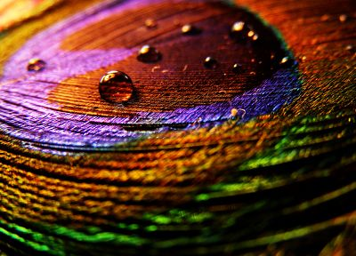 multicolor, water drops, macro - desktop wallpaper