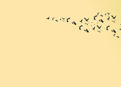 birds, pigeons - desktop wallpaper