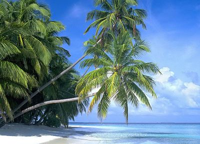 paradise, islands, palm trees, beaches - random desktop wallpaper