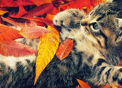 autumn, cats, animals, leaves, camouflage, fallen leaves - desktop wallpaper