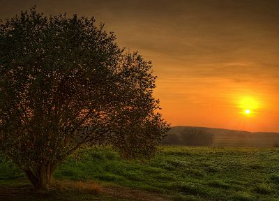sunset, landscapes, trees, fields - desktop wallpaper