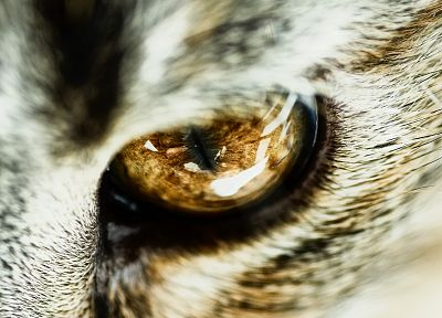 close-up, eyes, cats, animals - desktop wallpaper
