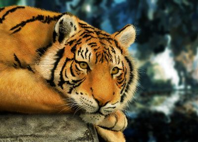 paintings, animals, tigers, science fiction, artwork - related desktop wallpaper