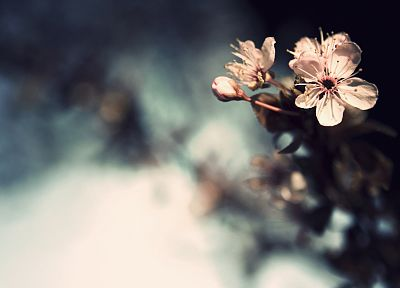 flowers, bokeh - related desktop wallpaper