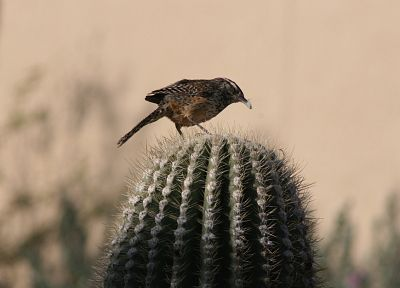 birds, cactus - random desktop wallpaper