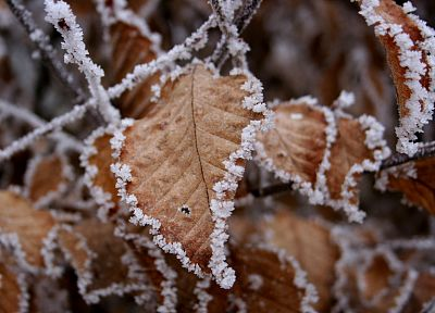 winter, leaves, frost - desktop wallpaper