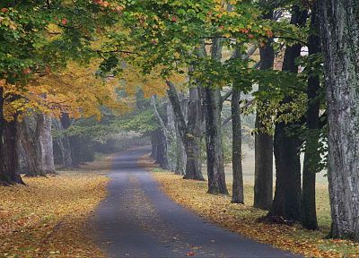 trees, autumn, journey, roads, louisville - random desktop wallpaper