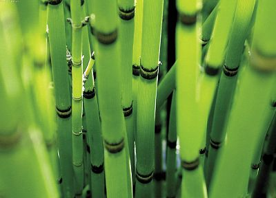 nature, equisetum - random desktop wallpaper