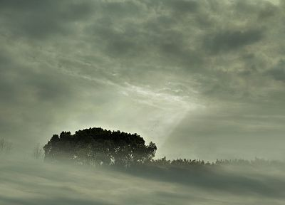 clouds, landscapes, nature, trees, mist, sunlight, monochrome - desktop wallpaper