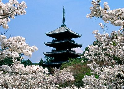Japan, cherry blossoms, Kyoto, temples, Japanese architecture - random desktop wallpaper