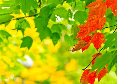 autumn, yellow, leaves - desktop wallpaper