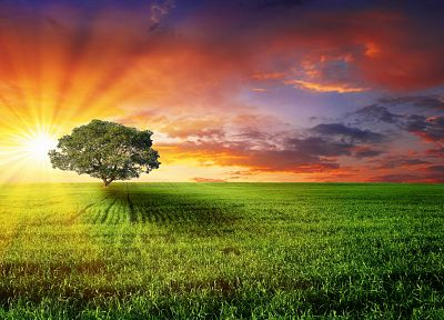 landscapes, nature, trees, multicolor, fields, sunlight - related desktop wallpaper