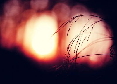 nature, grass, bokeh - random desktop wallpaper