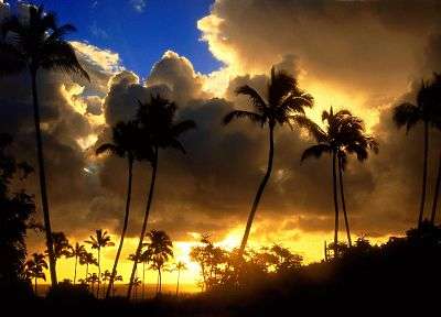 sunrise, clouds, landscapes, nature, palm trees - random desktop wallpaper