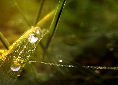 grass, water drops, depth of field - desktop wallpaper