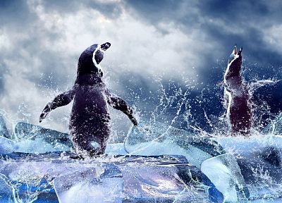 ice, animals, penguins - related desktop wallpaper