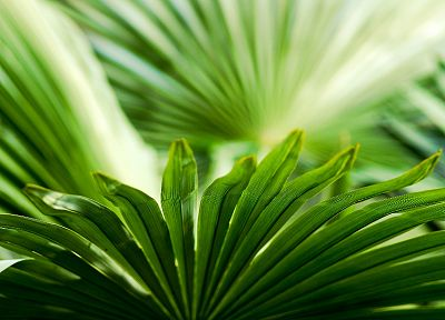 leaves, palm leaves - related desktop wallpaper