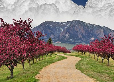 mountains, clouds, cherry blossoms, trees, spring, trail, Colorado, boulder - random desktop wallpaper