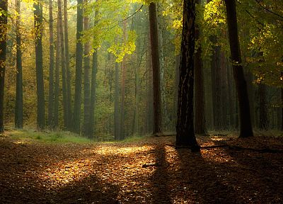 landscapes, nature, trees, autumn, forests - related desktop wallpaper