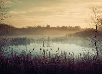 landscapes, fog, mist, ponds, morning, lakes, reeds - random desktop wallpaper