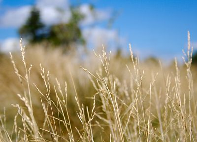 close-up, grass, blurry, depth of field - related desktop wallpaper