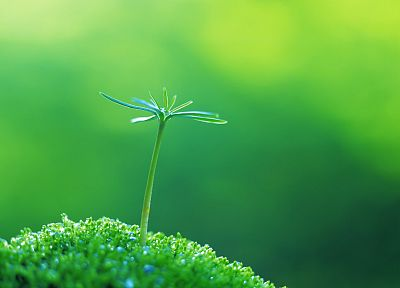 green, close-up, nature, plants, macro - desktop wallpaper