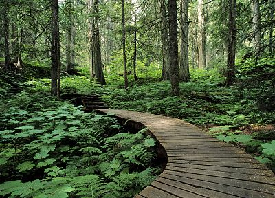 green, nature, trees, forests, paths, roads, boardwalk - desktop wallpaper