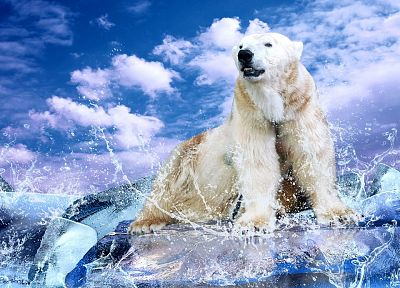 water, clouds, animals, polar bears - desktop wallpaper
