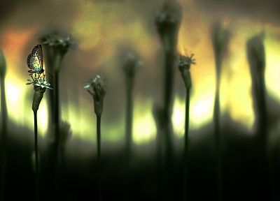 plants, depth of field, butterflies - desktop wallpaper