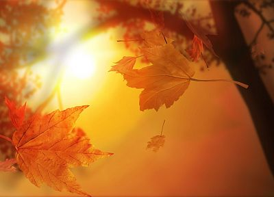 nature, autumn, leaves, maple leaf - desktop wallpaper