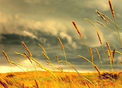 clouds, landscapes, nature, fields, skyscapes, land, rye - desktop wallpaper
