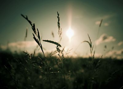 nature, Sun, dark, grass, macro, depth of field - random desktop wallpaper