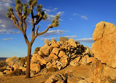 Mojave Desert, joshua tree - random desktop wallpaper