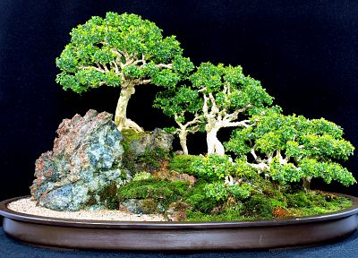 trees, bonsai - related desktop wallpaper