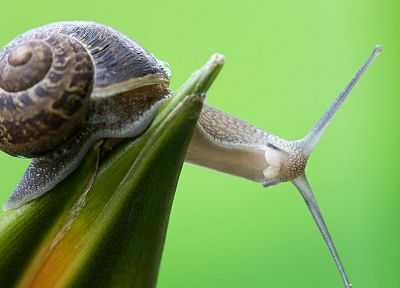 nature, curious, snails, macro, green background, molluscs - desktop wallpaper