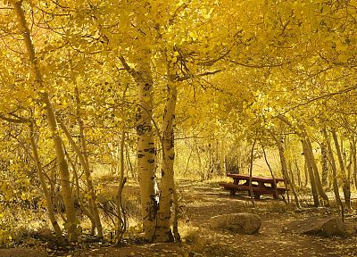 mountains, California, picnic, Aspen, Bishop - desktop wallpaper