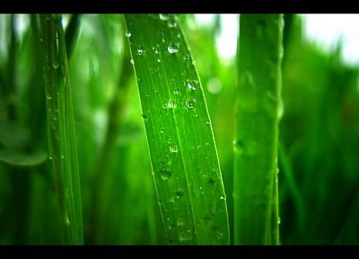 green, grass, water drops - random desktop wallpaper