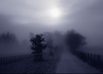 trees, fog, Country, roads, monochrome - random desktop wallpaper