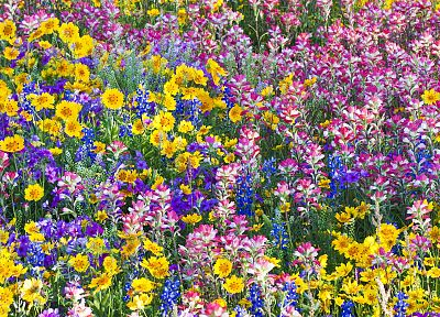 multicolor, flowers, spring, Texas, wildflowers, Bluebells - random desktop wallpaper