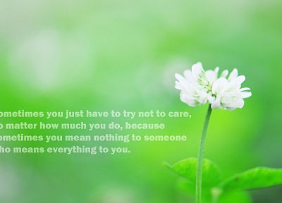 flowers, quotes - desktop wallpaper