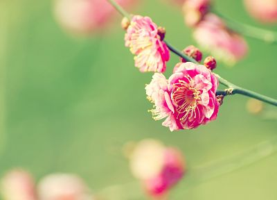 nature, flowers, pink, summer, DeviantART, blossoms, depth of field - desktop wallpaper