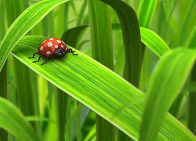 green, 3D view, nature, insects, leaves, summer, DeviantART, bugs, ladybirds - desktop wallpaper