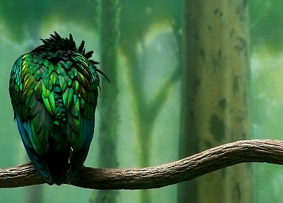 green, trees, forests, birds, feathers, artwork, branches, iridescence - related desktop wallpaper