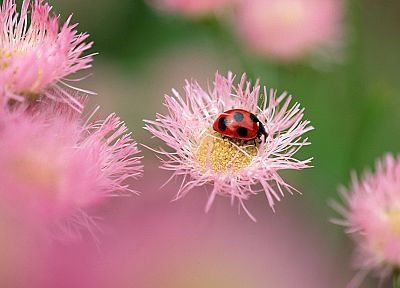 insects, macro, ladybirds - related desktop wallpaper