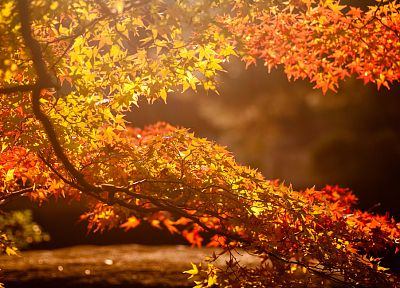 landscapes, Sun, trees, autumn, leaves, maple leaf - desktop wallpaper